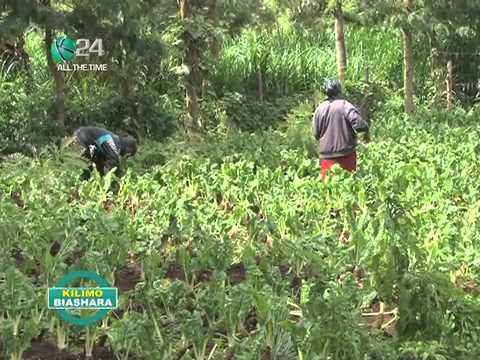 Kilimo Biashara: Growing African Vegetables