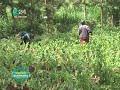 Kilimo Biashara: Growing African Vegetables mp4,hd,3gp,mp3 free download Kilimo Biashara: Growing African Vegetables