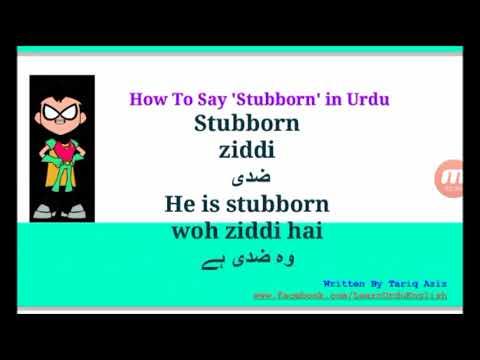Stubborn In Urdu - Learn Urdu Vocabulary