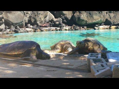 Sea Life Park Adventure, Honolulu Hawaii