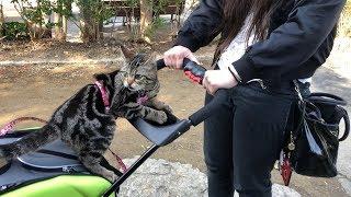 妹と初めてのペットカートで広すぎる公園をお散歩する猫