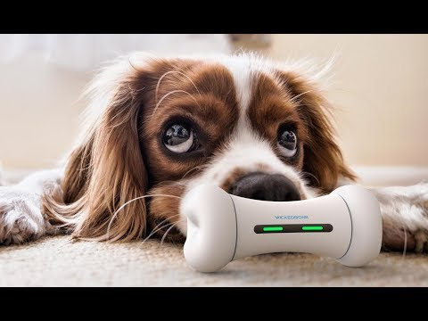 WICKEDBONE - World's First Smart & Interactive Dog Toy By Cheerble