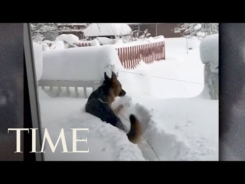 Watch This German Shephard's Amazement At Record Snowfall Near Erie, PA | TIME