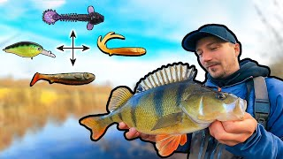 COLD WATER Guide - Effective Methods for Perch | Team Galant