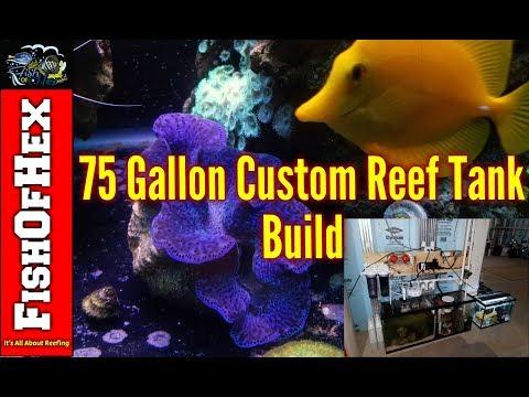 JP's 75 Gallon – FishOfHex Aquatics