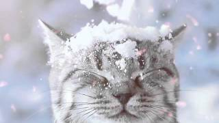 Фото смешных котов ржака!
