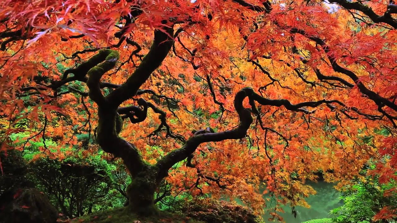 Japanese Garden autumn at the portland japanese garden: an hdserenescapes