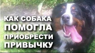 Как собака помогла приобрести привычку