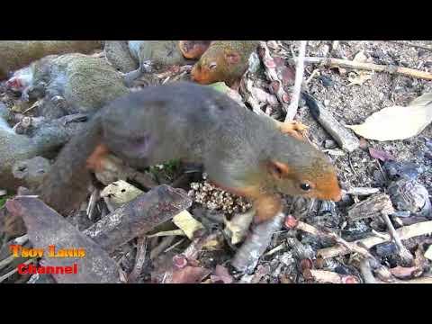 Yos Hav Zoov Nyob Teb Chaws Nplog/ Hunting @ Laos  2018 Daim 3
