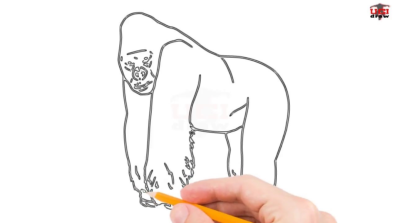 How To Draw A Gorilla Step By Step Easy For Kids Beginners