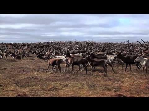 Children Of The Tundra - Dance