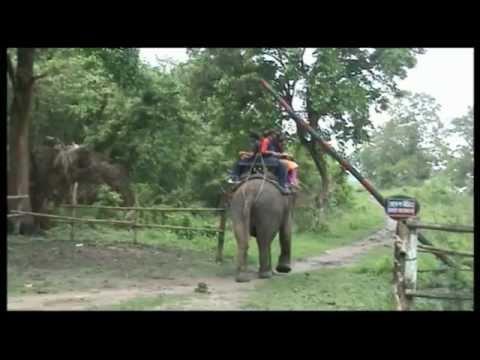 ASSAM-MEGHALAYA-BHRAMAN-KAZIRANGA-FOREST