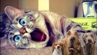 物 かわいい : かわいいと面白い動物、かわいい、ふわふわ猫と好奇心、...