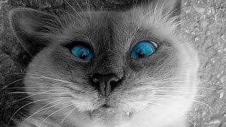 Смешные кошки: Самое смешное видео о котах, кошках и котятах.