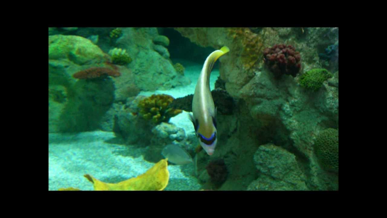 Fish aquarium in jeddah - Fakieh Aquarium Jeddah Saudia Arabia