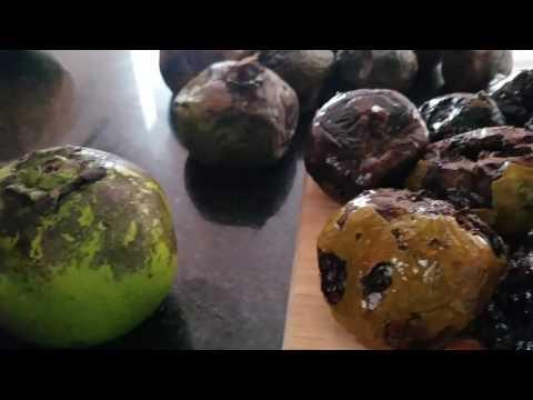 Black Sapote Fruit Local Organic Miami