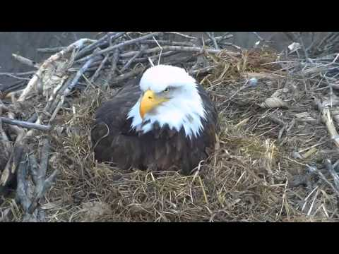 Decorah N2B 16/03/18  17:07 Lovely Mom portrait zoom