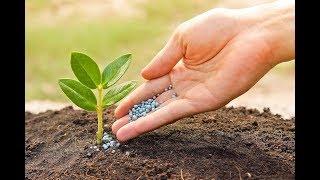Самые лучшие органические удобрения для сада и огорода своими руками
