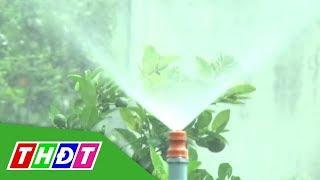 Hiệu quả tưới phun trên vườn cây ăn trái | Kiến thức nông nghiệp | THDT