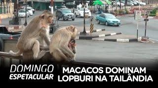 Macacos dominam cidade de Lopburi, na Tailândia
