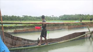 Gher farming (rice - prawn farming) in Bangladesh