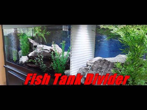 DIY Aquarium Divider In Cichlid Fish Tank