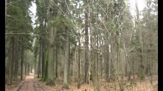 Ursus i LKT  w lesie