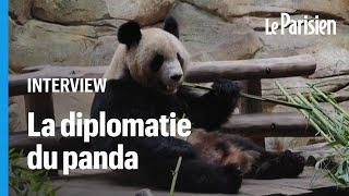 Comment les pandas servent les intérêts de la Chine depuis 1941