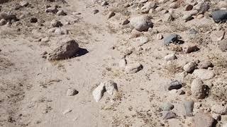 Atacama mozolny  marsz...