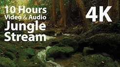 4K UHD 10 hours - Jungle Stream - mindfulness, ambience, relaxing, meditation, nature