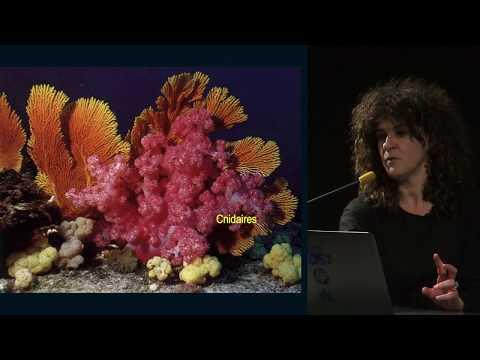 Les algues, sources de molécules santé ?