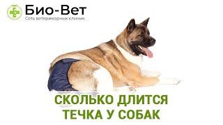 Сколько Длится Течка У Собак & Продолжительность Течки.  Ветклиника Био Вет