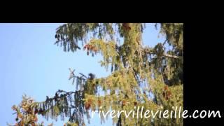белка почки елки ест, forest, Russia