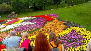 Выставка цветов на ''Спивочому Поле'' в Киеве Flower exhibition with ''Spilosoma Field'' in Kiev