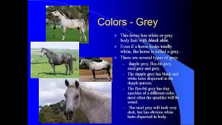 Equine coat colors