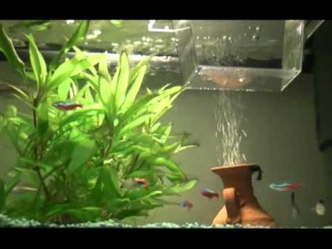 acquario tropicale acqua dolce 25 litri youtube