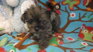 List Video Mainely Puppies Plus Download Mp3 Lossless Mp4 Hd