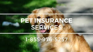 Pet Insurance Malaga WA - Best Pet Health Insurance For Dogs