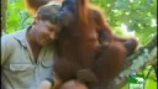 Remembering Steve Irwin video version