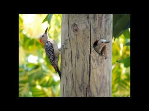 Bird Watching in Honduras
