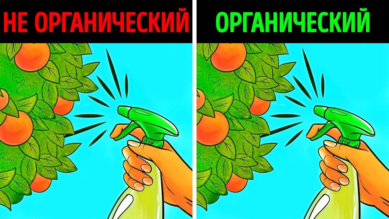 Органические продукты: правда или миф?