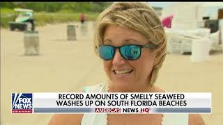 Fox News: Seaweed takeover at Florida beaches