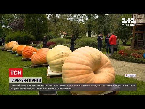 ТСН: Осінній рекорд: у Словенії провели фестиваль гарбузів-гігантів