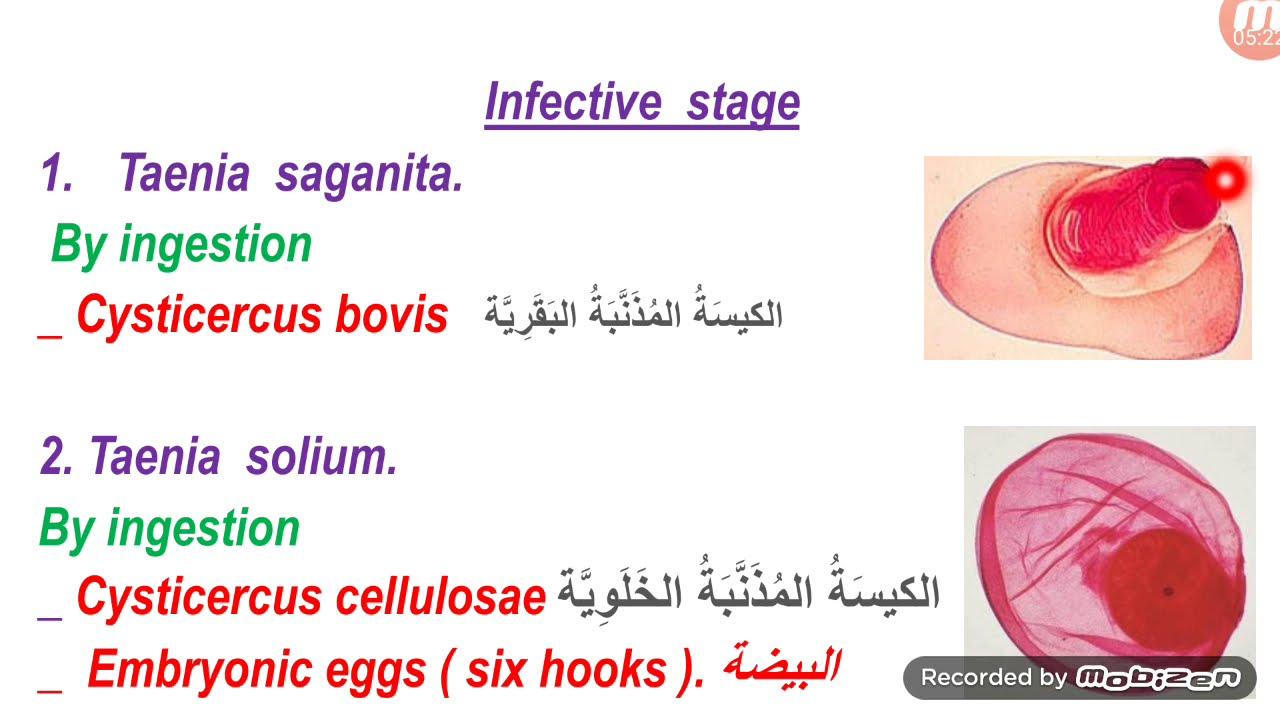 teniosis biohelminthiasis