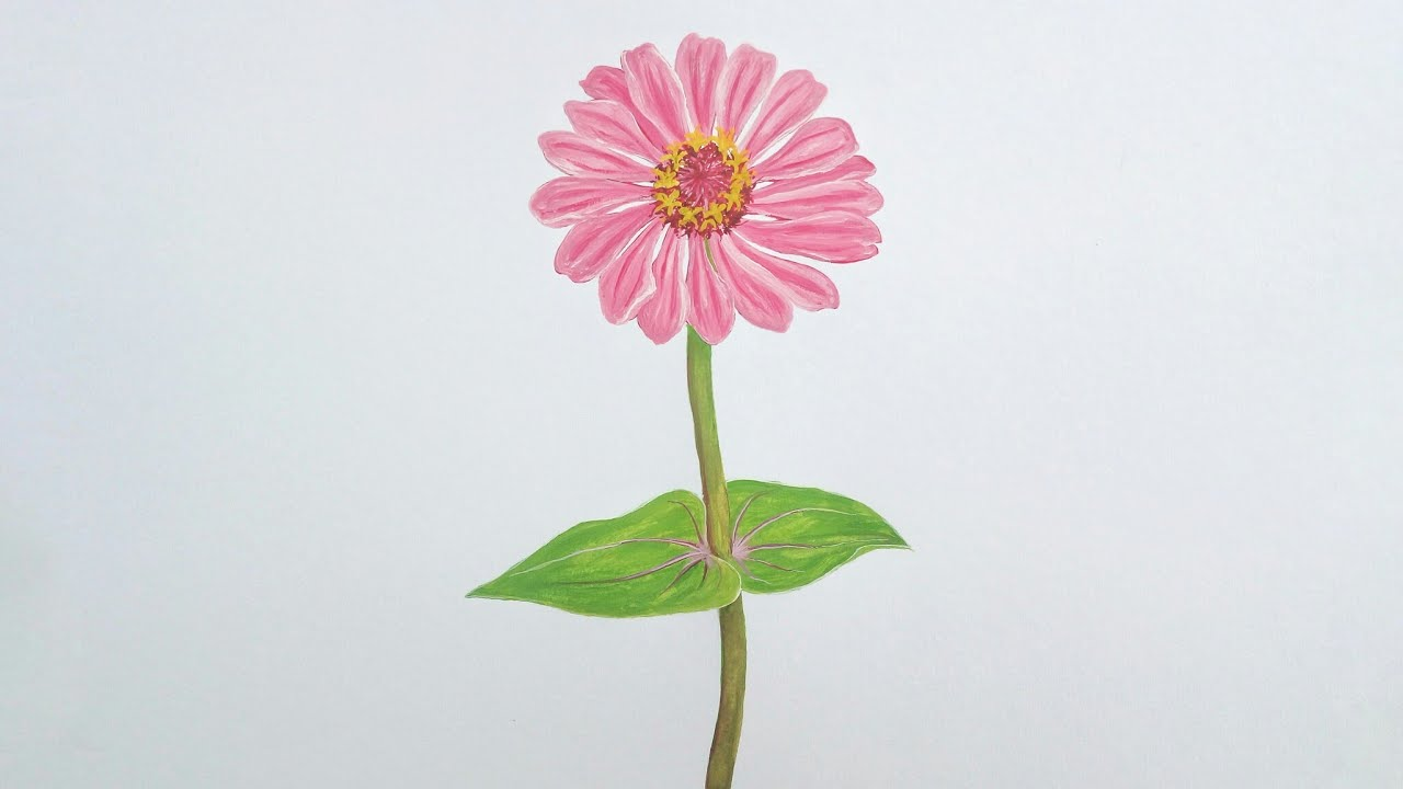 Zinnia Flower Drawing With Watercolor Youtube