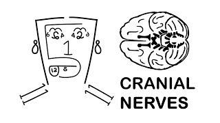 CRANIAL NERVES made easy!!