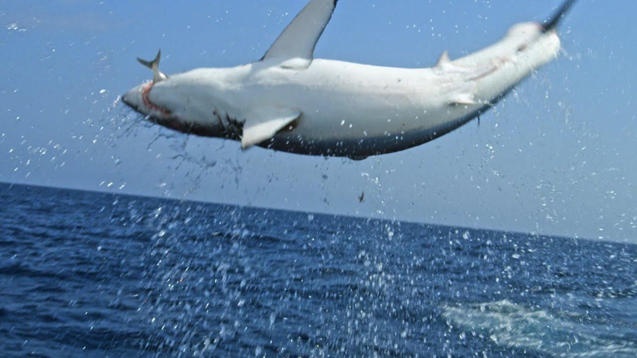 Monster Mako Shark Flys Out Of Water To Ambush Prey | SHARK WEEK