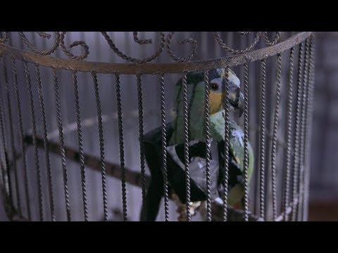 Говорящий Попугай | Очень Страшное Кино 2 (2001)