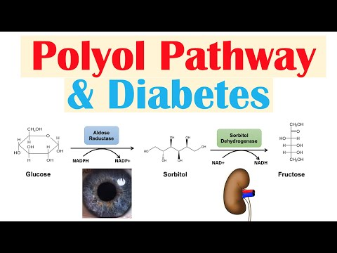 Polyol Pathway and Its Role in Diabetes Pathogenesis