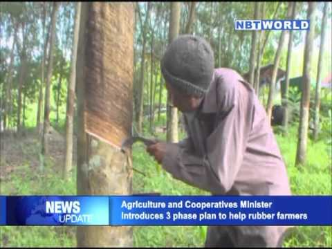 Agriculture and Cooperatives Minister introduces 3-phase plan to help rubber farmers